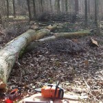 Forestry and Woodland Management