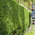 Hedge Work