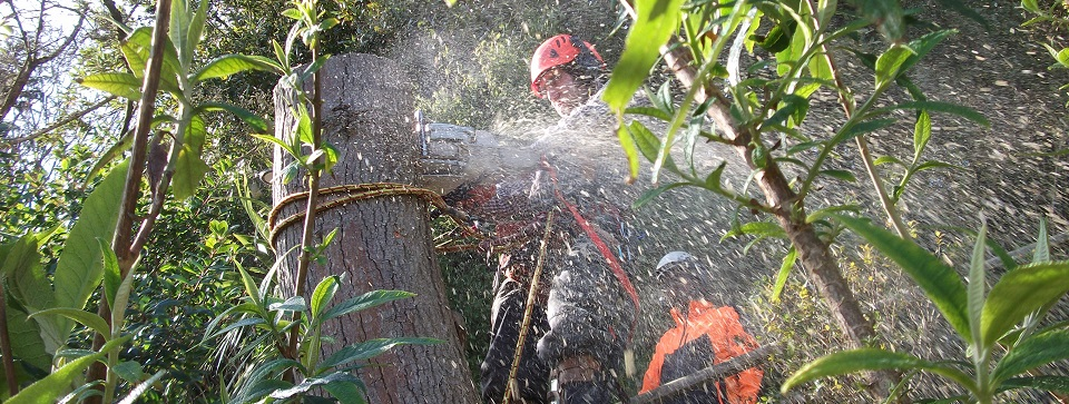 Fully Qualified and Insured Tree Surgeons Based on the Isle of Wight